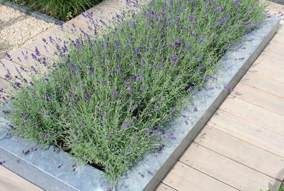 Great combination: Lavender, zinc and wood