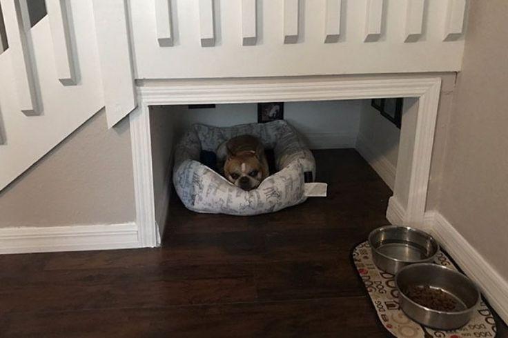 Homem constrói quarto de luxo embaixo da escada para cãozinho
