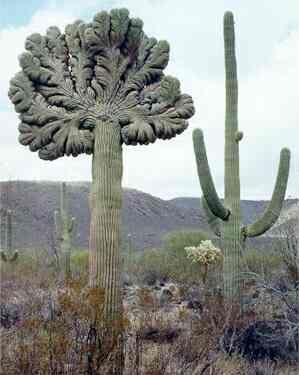 Sonoran Desert - Arizona