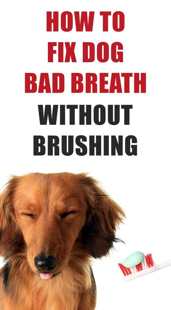 How to fix a dog's bad breath? Dog breath shouldn't be