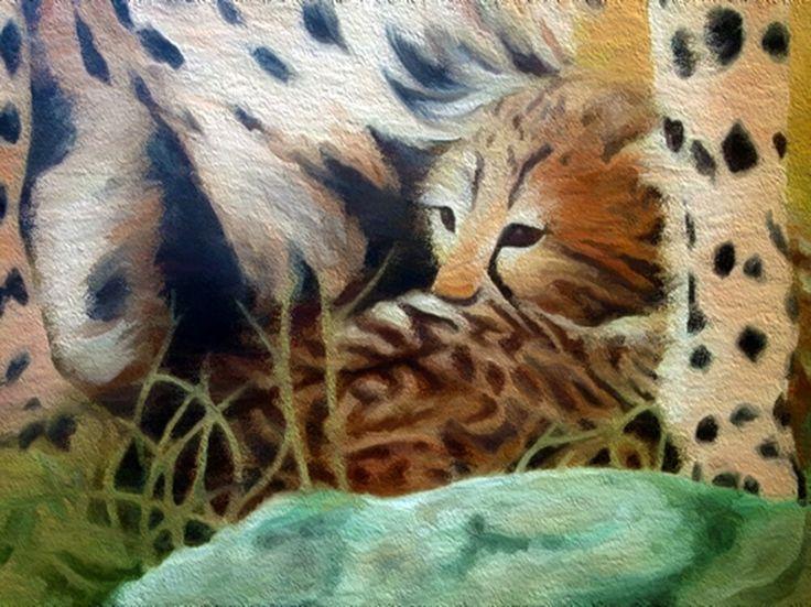 Cheetah baby by Simon Knott Artist #cat big cats website ~ simbird.com