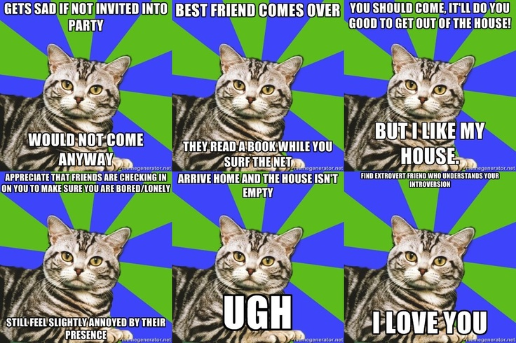 I can't believe I just discovered Introvert Cat. I have literally done all of these things.