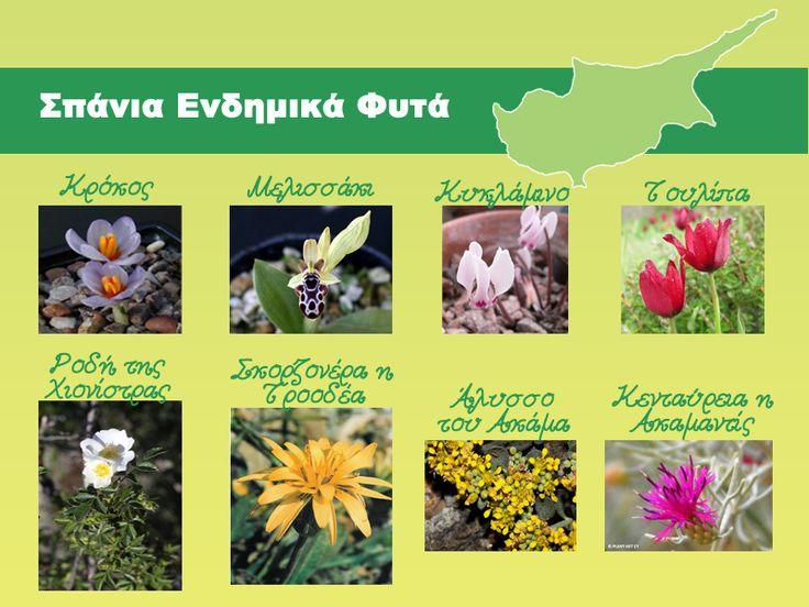 Αφίσα με τα σπάνια ενδημικά φυτά της Κύπρου