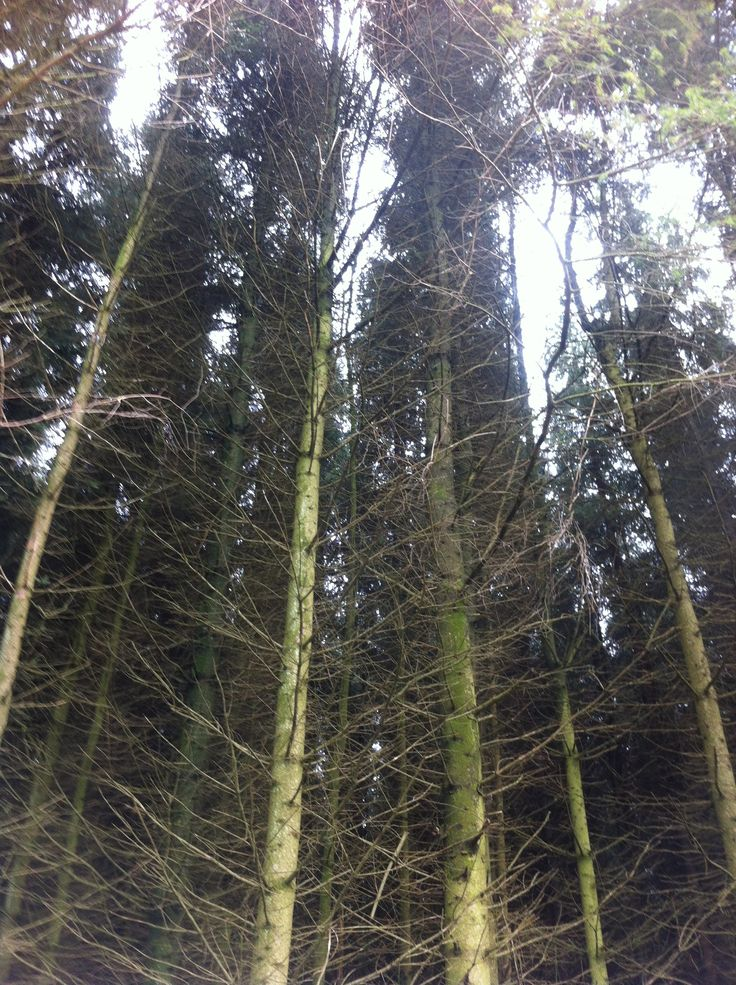 trees, at the bottom of Pen y fan mountain in Wales