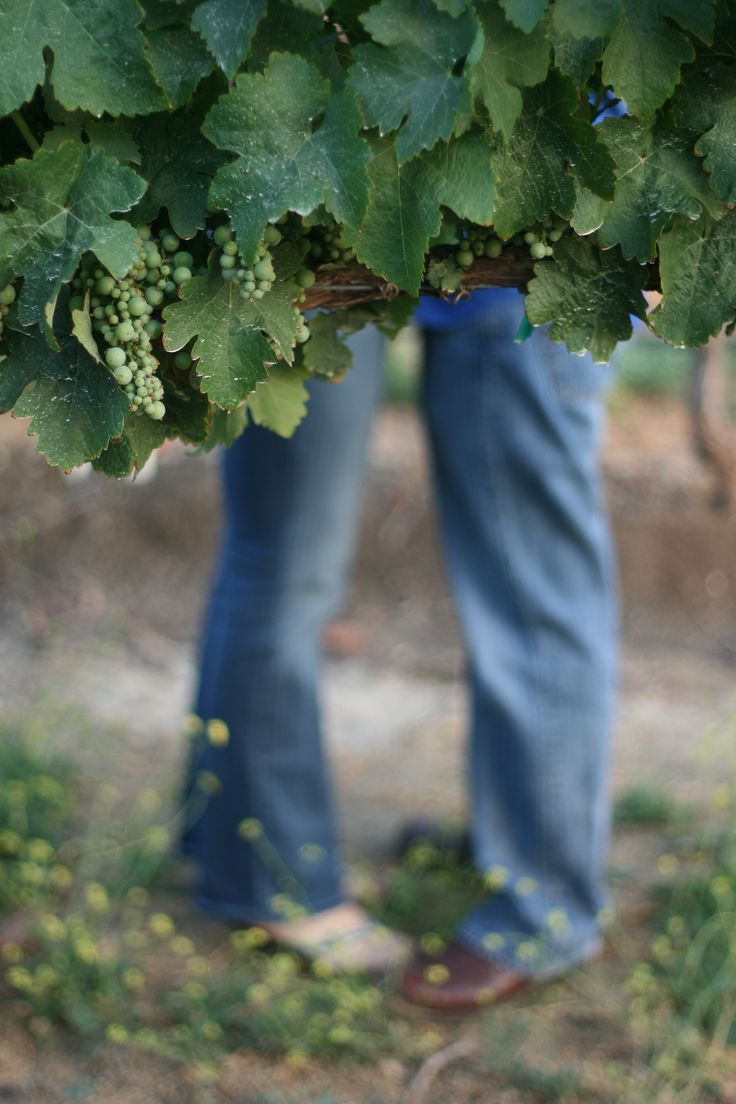 Vineyard Engagement Photo. Love the feet blurred with the leaves in focus. Inspiration for wedding photo!