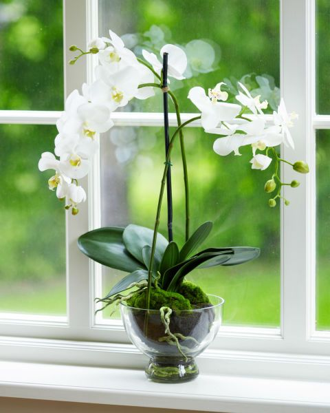 """""""Believe it or not, these orchids don't mind being neglected a little,"""" says Vass, making them perfect for some extra ambiance in the entryway without any extra maintenance. The fragrant beauties can bloom for up to three months at a time."""