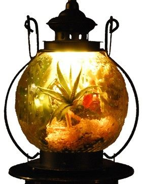 Octopus's Garden Illuminated Floral Design, Orange, Large eclectic-terrariums