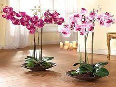 такой простой  уход за орхидеями в домашних условиях