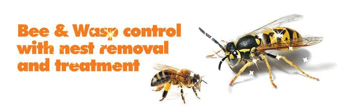 Avon pest control professional provides inexpensive solution and treatments for bed bugs get rid of wasps, pavement ants, rodent, cockroaches etc.  For more information, visit: www.avonpestcontrol.ca