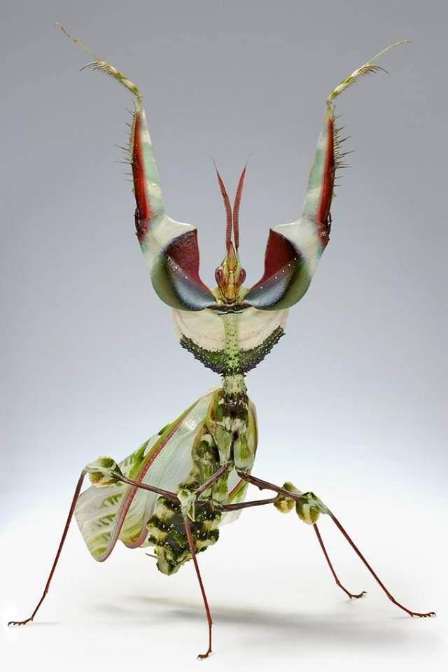 Pin By Michelle Ferreira On Creatures With Flare In 2020 Beautiful Bugs Cool Insects Insects