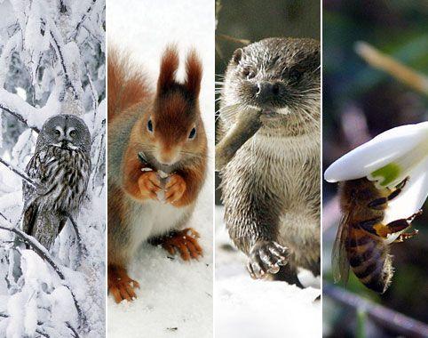 Tiere im Winter - Schlafen, wärmen, tarnen Wissens-Lexikon Tiere im Winter (c) dpa/Collage: BR