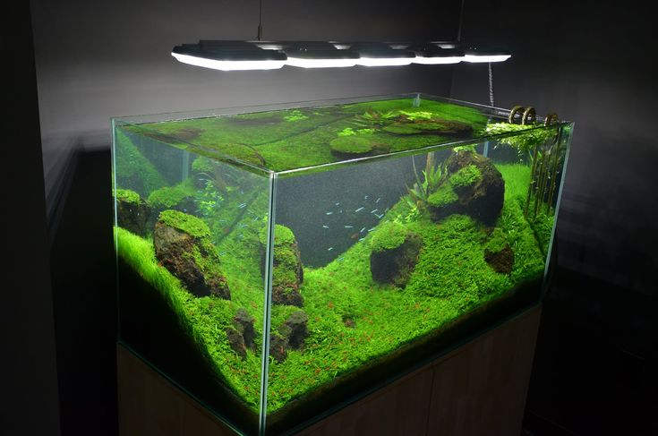 Custom 120 gallon mr aqua rimless planted tank aquarium for Planted tank fish