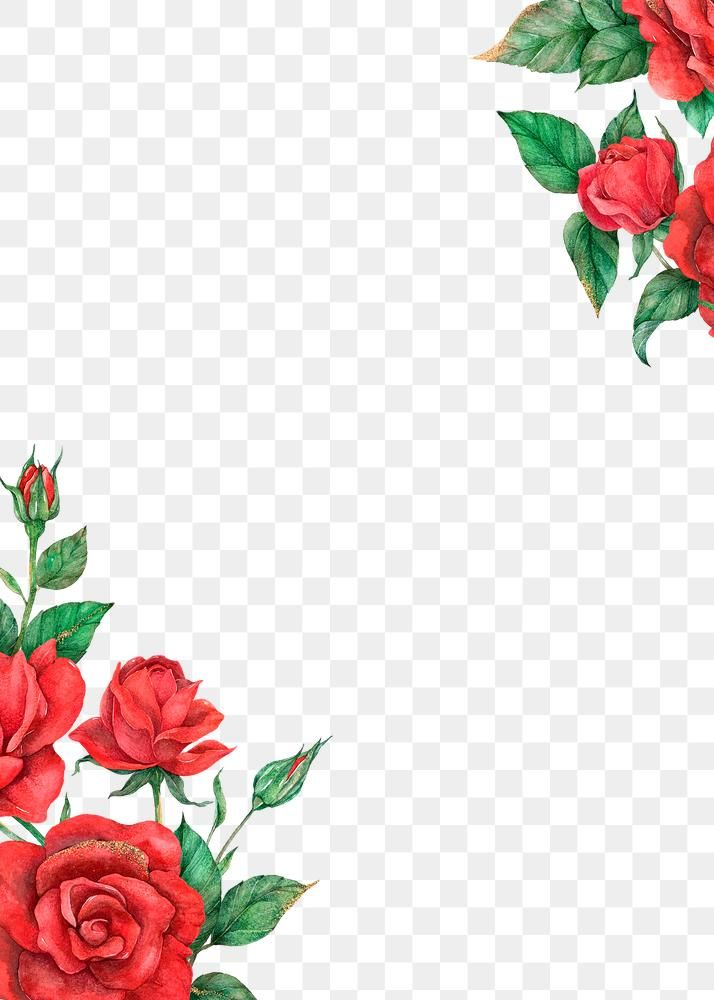 Red Rose Border Frame Png Transparent Background Free Image By Rawpixel Com Boom Red Roses Transparent Background Bloom Blossom