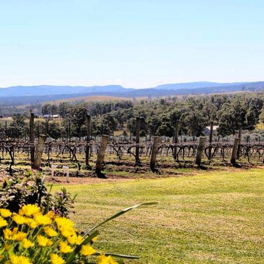 The stunning view from Scarborough Wine Co cellar door in the Hunter Valley, Australia. Source : thewinemuse www.winemuse.com.au