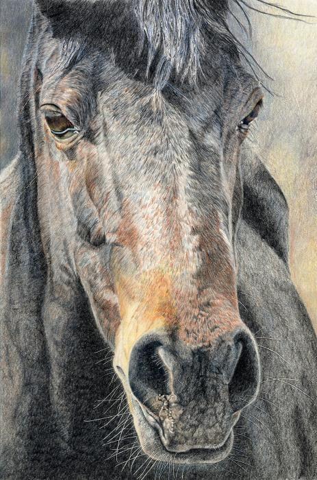 """""""High Desert"""", Color Pencil Drawing, Joanne Stevens"""