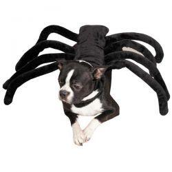 Dog Spider Costume