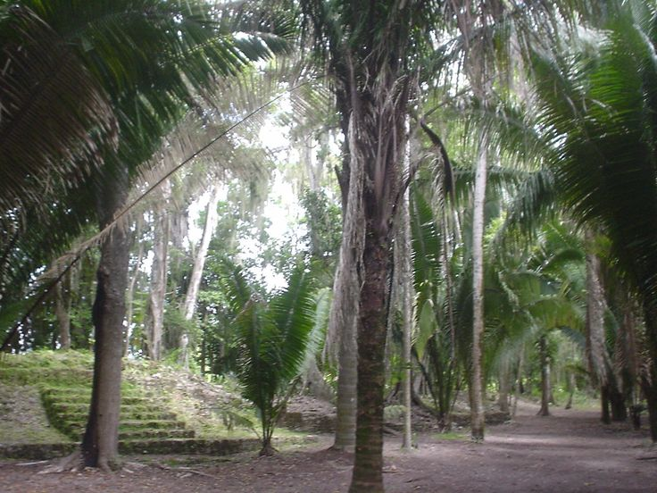 Beautiful setting with amazing old trees at the Maya site of Chacchoben, only at a 1 hour drive from Eco Hotel Restaurant Maya Luna Mahahual