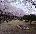 gambar pemandangan indah di negeri Jepang