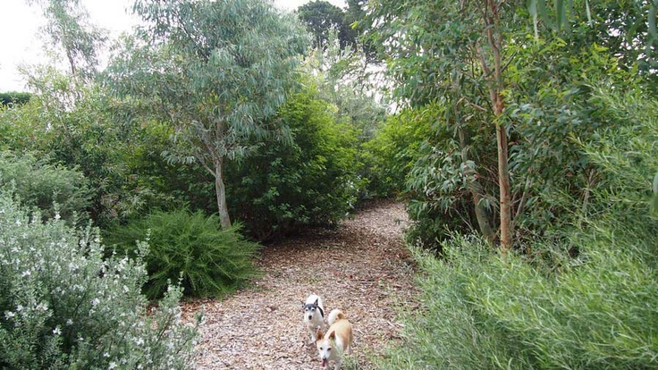 The dogs seem to like the new gardens