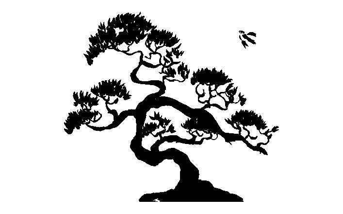 Line Drawing Tree : Imgs for gt bonsai tree line drawing whiterock gardens
