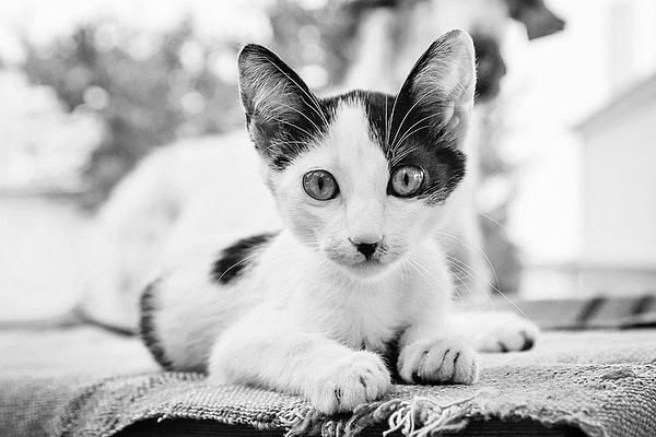 Hitler of the Greece - by Cristina Velina Ion. A portrait of a very cute little cat made in Thasos, Greece.