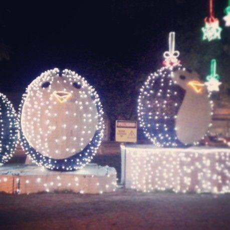 Pinguinos, iluminación navideña Granada-Meta
