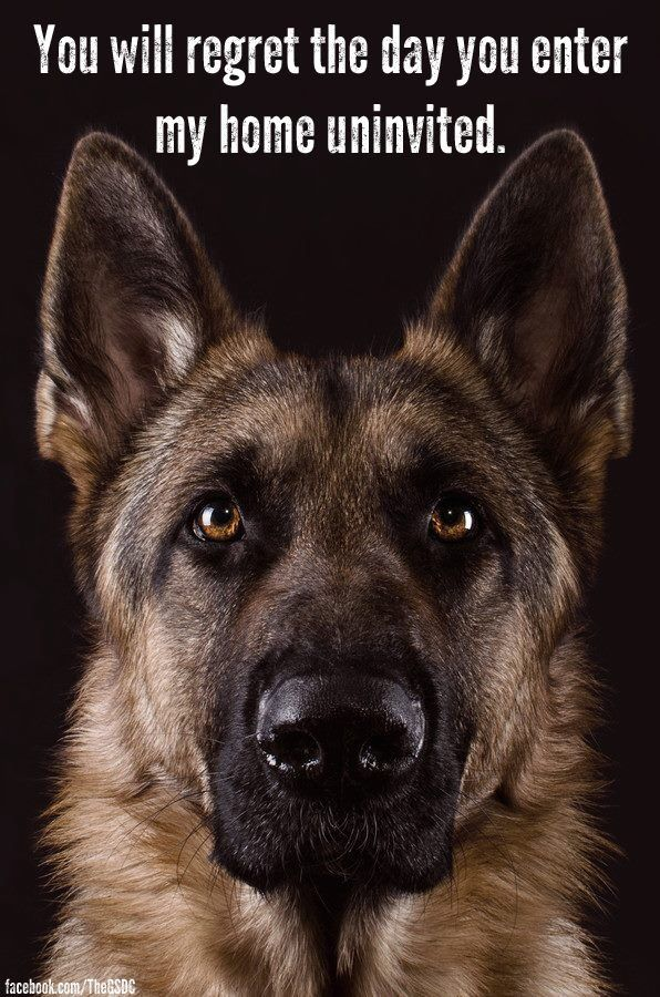 .Ever since I have owned dogs (for many-many-many years) I have yet to be broken into, perhaps the Shepherd and the Danes have something to do with this ha ha!