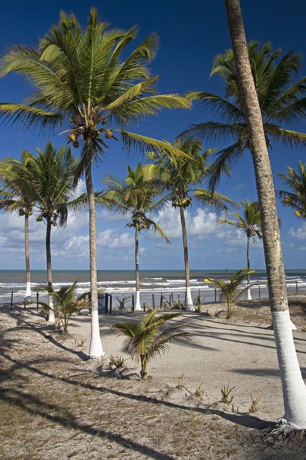 Praia em Canavieiras, estado da Bahia, Brasil.  Fotografia: Alvaro Elkis / Divulgação.  http://casavogue.globo.com/Interiores/casas/noticia/2014/10/uma-casa-de-fazenda-entre-o-rio-e-o-mar.html