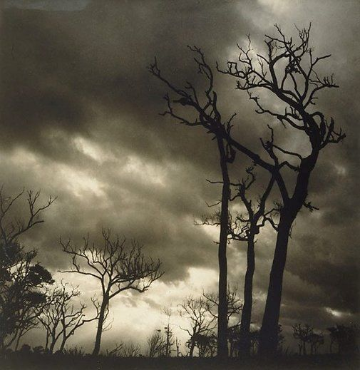 Storm by Olive Cotton