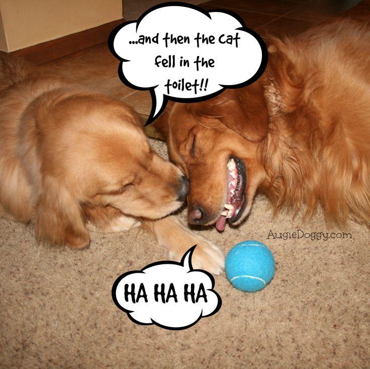 Funny Golden Retriever Quotes Golden Retriever Memes Image Memes