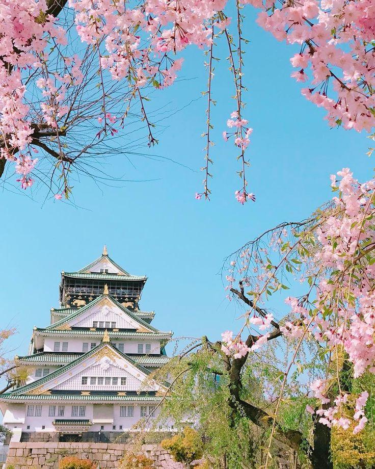 Osaka Castle, Osaka, Japan, 大阪城, 大阪, 日本, #sakura #cherryblossom 桜