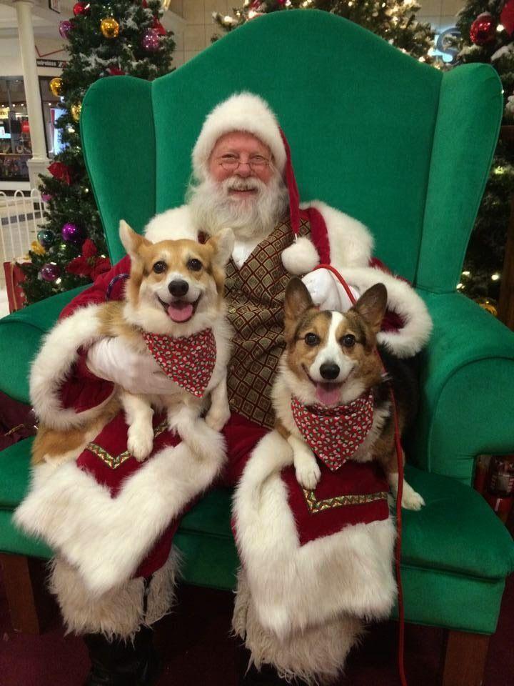 The Daily Corgi: The Twelve Days of Christmas #Corgi Photos -- Day ...