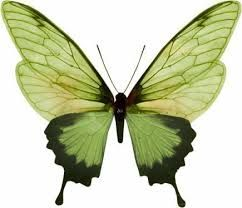Image result for green things tumblr