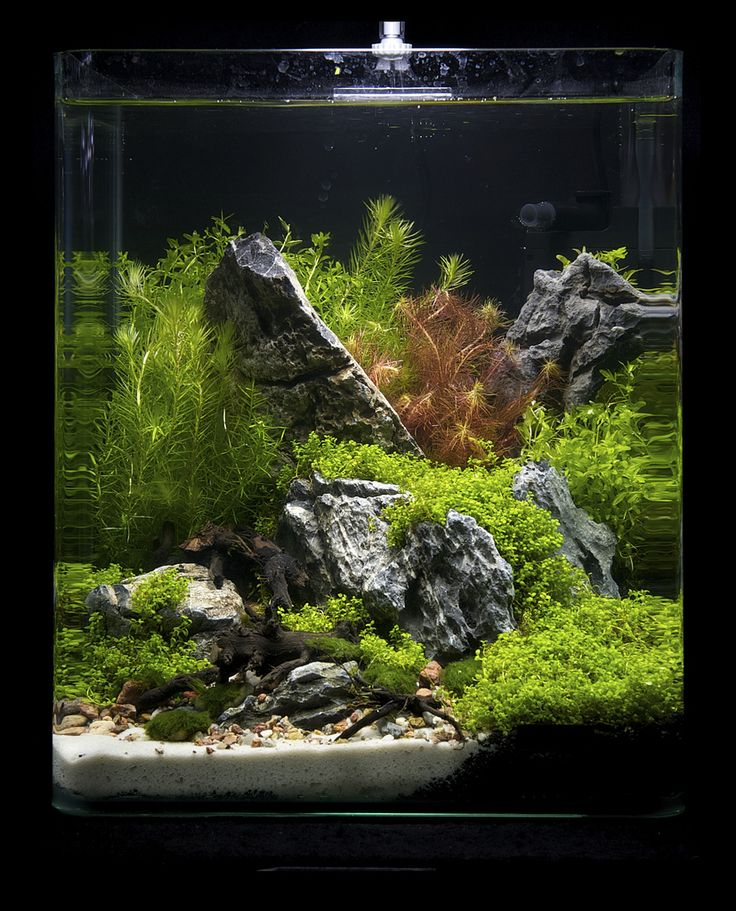 Freshwater Aquascape: Best 25+ Nano Aquarium Ideas On Pinterest