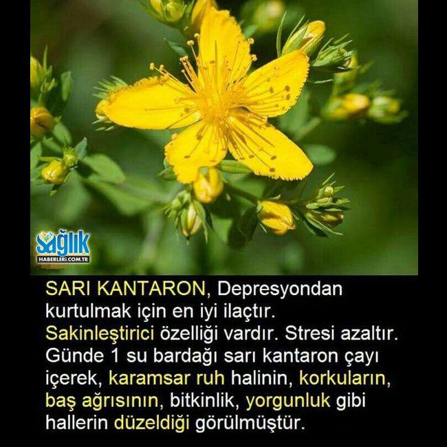 Sarı Kantaron'un faydaları.. #kantaron