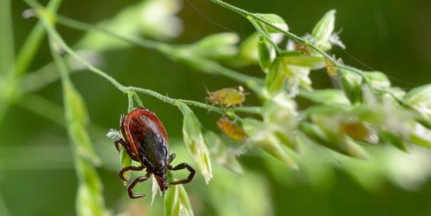 Entzündeter Insektenstich? Wann Insekten gefährlich sind