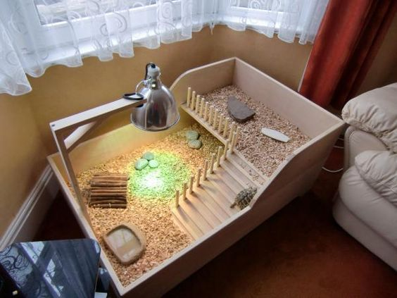 Red Footed Tortoise Indoor Enclosure | Tortoise Forum | Titan | Pinterest | Red footed tortoise, Red and Indoor