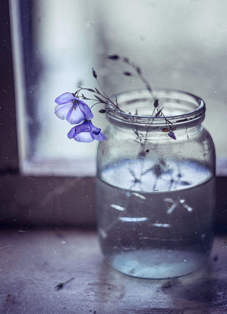 сделали ольге печальные картинки цветов восхищение любовь пускай