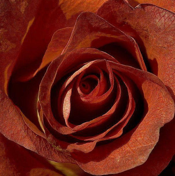 139 Best Images About Burnt Orange On Pinterest Burnt