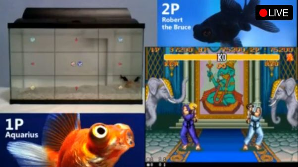 Two fish are playing Street Fighter 2 on Twitch - yes, reely | This scampi happenin! Two fish are battling it out on Street Fighter 2 for the enjoyment of the bored internet. Buying advice from the leading technology site