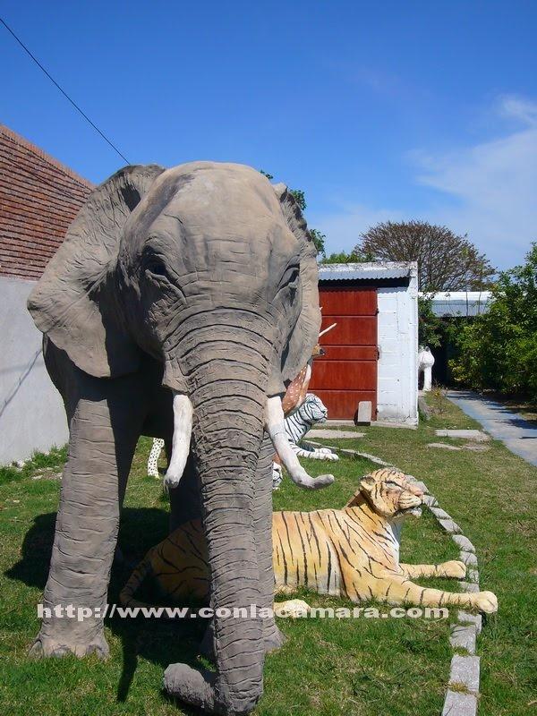 El sueño del pibe !!Tener un elefante, tres tigres, un leopardo, caballos y ciervos en el jardin de tu casa !! | Con la camara en el bolsillo