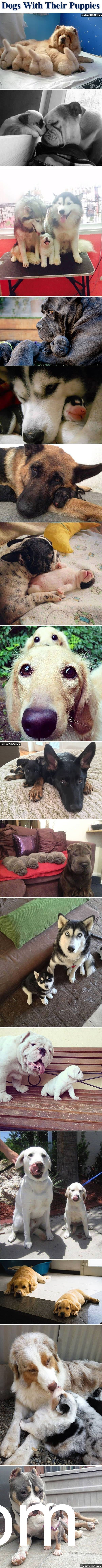 LIKE some #PaleoPets Side effects of viewing these images include: feelings of joy, feelings of sadness, the desire to be loved, ovary implosion and so on. http://m.lovethispic.com/image/193076/dogs-with-their-puppies