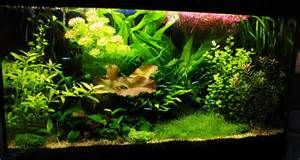 ... Fish Tank Background On Planted Tropical Aquarium Fish Tank Background