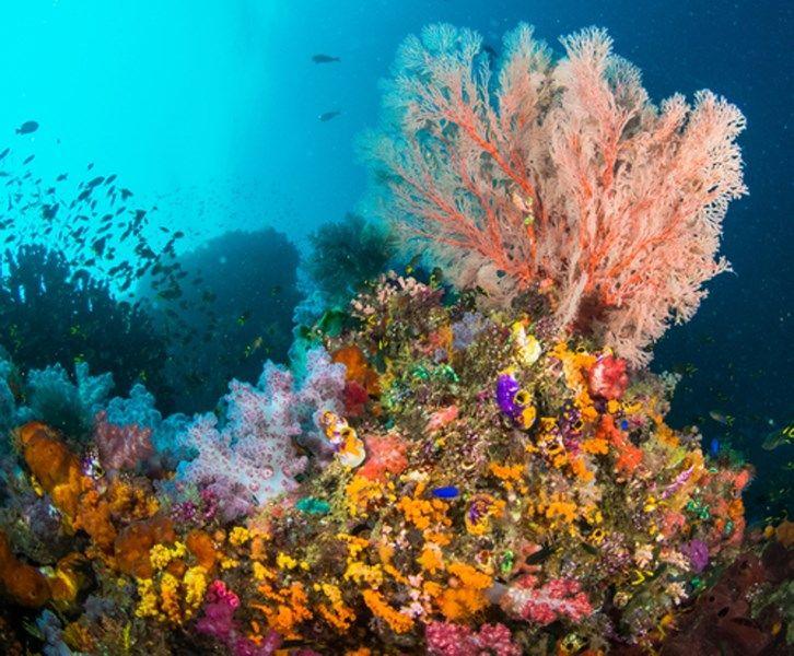 Dit zijn de mooiste locaties voor wie graag snorkelt - Het Nieuwsblad: http://www.nieuwsblad.be/cnt/dmf20150812_01815495