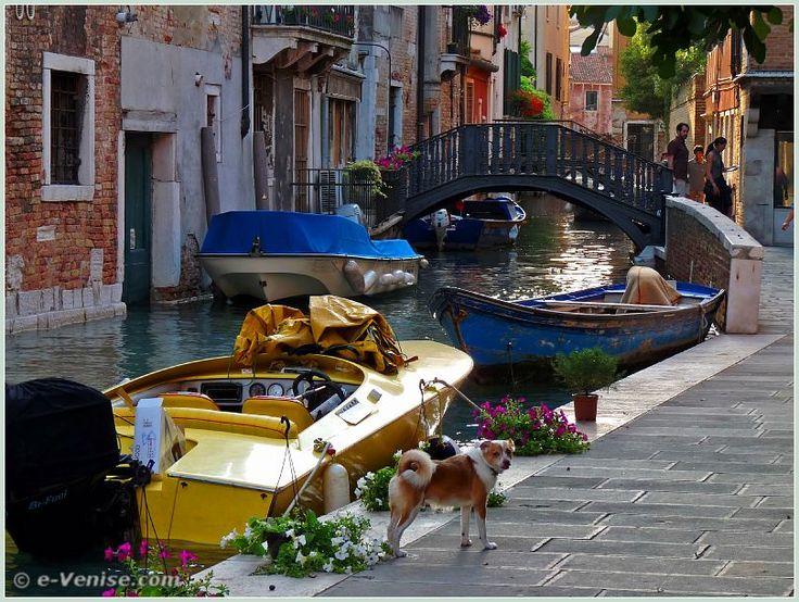 Un toutou bien heureux, le long du rio de la Frescada, devant le pont de la Dona Onesta, dans le sestiere de San Polo à Venise.