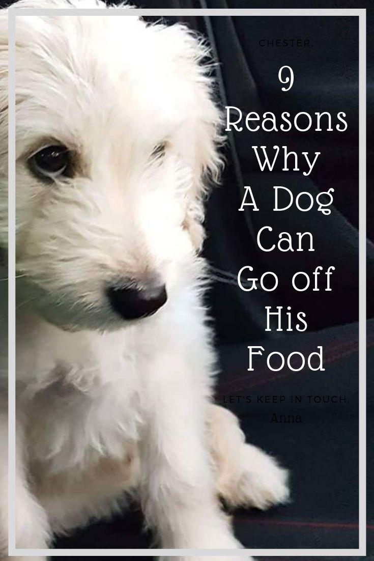 Appetite Stimulants For Dogs 7 Lifesaving Tips My Dog Wont Eat