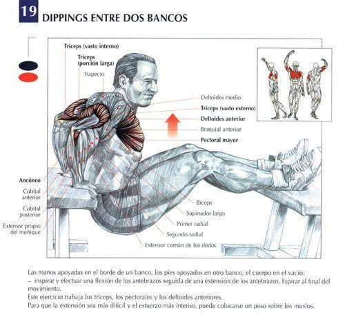 Guia de Ejercicios para los Triceps - BodyBuildingLatino