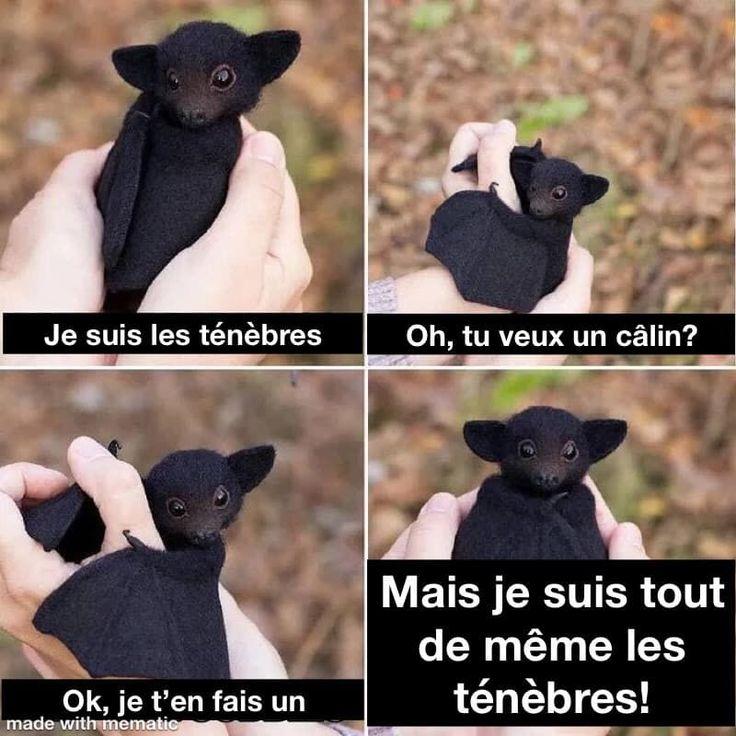 Je suis les ténèbres… mouha-ha-ha!! #benpourquoipas #humour #jokes #blagues …