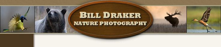 Encounters with Nature - Bill Draker Nature Photography - Turtles & Tortoises/Red-eared Slider, Trachemys scripta elegans