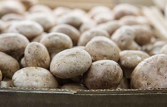 Mushrooms | The Happy Apple